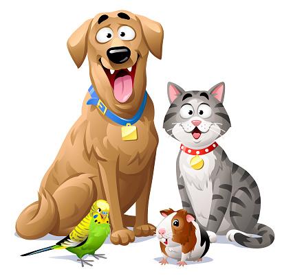 Cat, Dog, Budgie And Guinea Pig