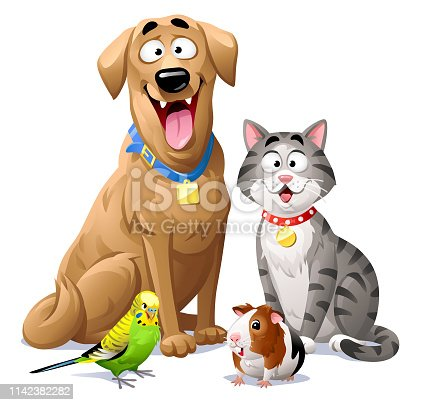 Vector illustration of a cheerful group of pets. A dog, a gray striped cat, a green budgie and a guinea pig, sitting next to each other, isolated on white. Concept for pets, domestic animals, veterinarians and pet shops.
