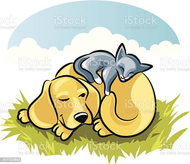 Cat dog sleeping c vector id477122843?b=1&k=6&m=477122843&s=612x612&h=0modaofkinyixkr 076mhd4cuht0nm  2tvscbnh87c=