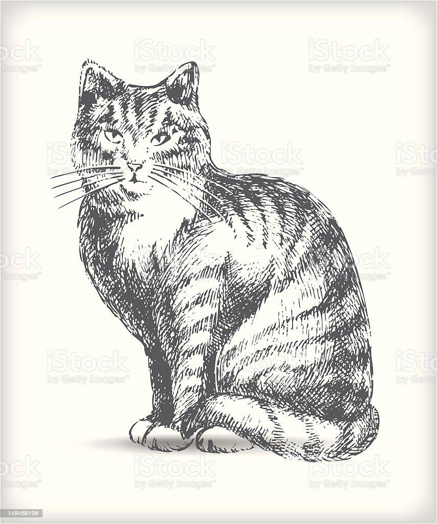 Gatto disegno immagini vettoriali stock e altre immagini - Gatto disegno modello di gatto ...