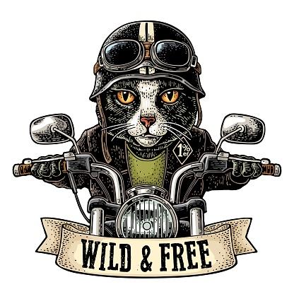 Katze fährt Motorradfahren Vector Vintage Gravur