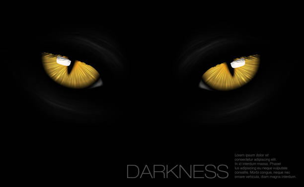 cat eyes in darkness cat eyes in darkness animal eye stock illustrations
