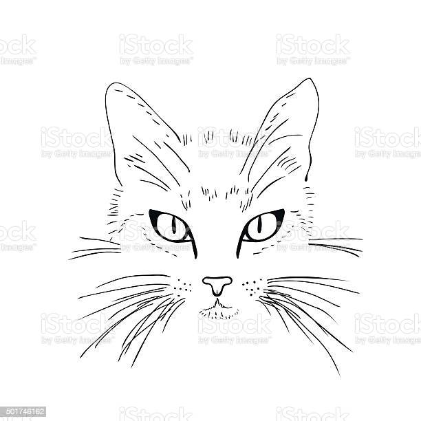 Cat face black and white sketch vector id501746162?b=1&k=6&m=501746162&s=612x612&h=3w4uhx0zeehc2tjxe3bebaqzkle fbwzggtyzfnsf44=