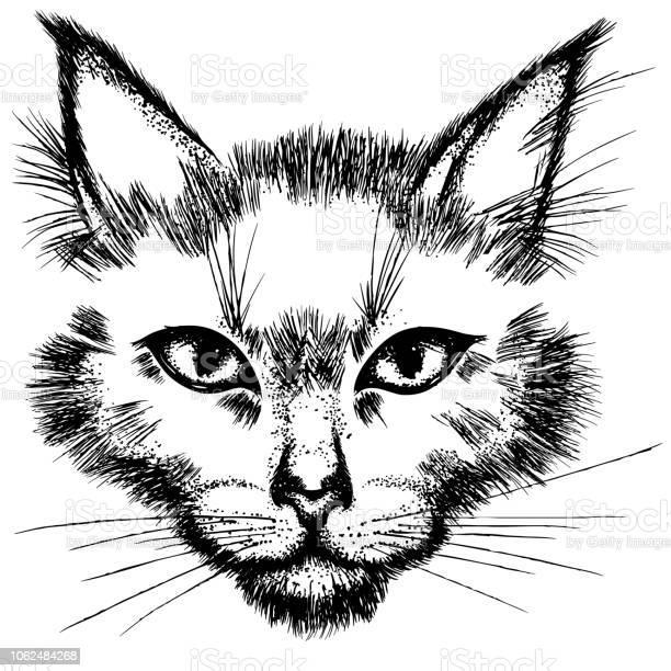 Cat face vector id1062484268?b=1&k=6&m=1062484268&s=612x612&h=om58 w60qdb9bm7ir03m7 015 r5zve0q3sb4yslb2e=