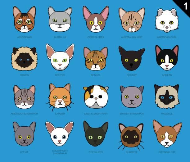 Royalty Free Birman Cat Clip Art Vector Images