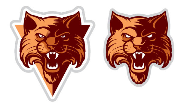 Cat Head icontype Wildcat icon / Cat Head icontype. Cartoon character vector. Great for sports emblems & team mascots. bobcat stock illustrations