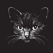 Cat head vector animal illustration for t-shirt