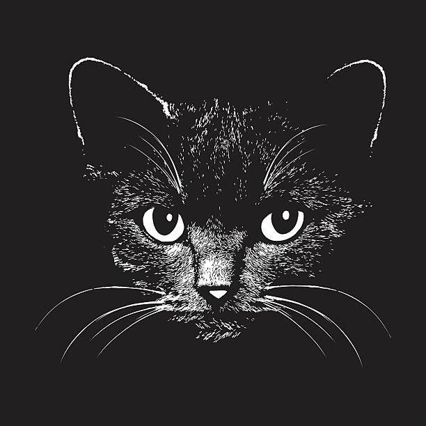 cat head vector animal illustration for t-shirt - tierkopf stock-grafiken, -clipart, -cartoons und -symbole