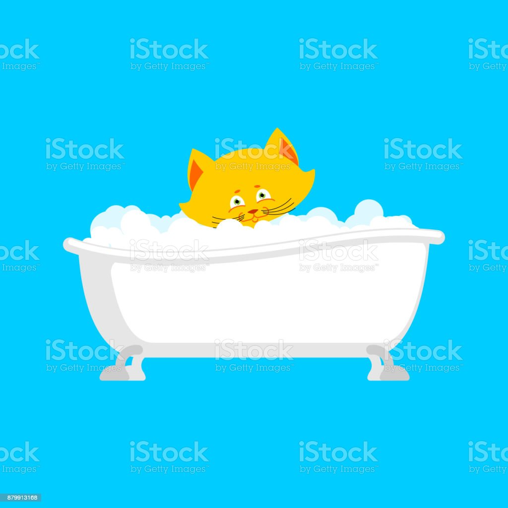 Cat in bath. Pet is washed. Vector illustration vector art illustration