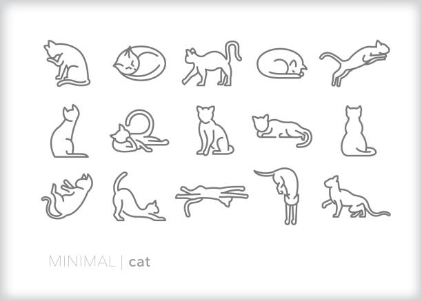 cat line icons of feline pets, indoor or outdoor, in various actions - cat stock illustrations