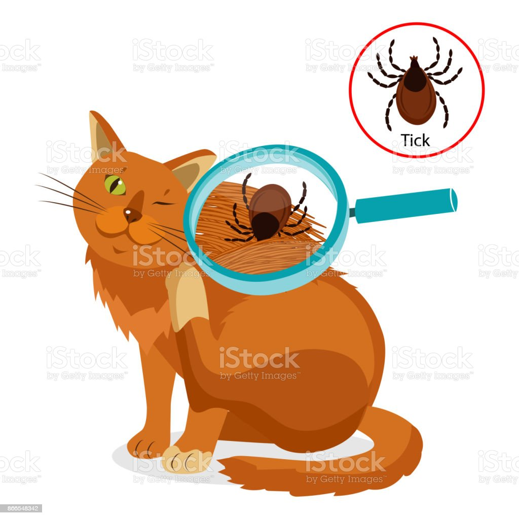 Cat Parasites. What To Know About Feline Parasites. Tick On Cat In The Fur As A Close Up Magnification Vector. vector art illustration