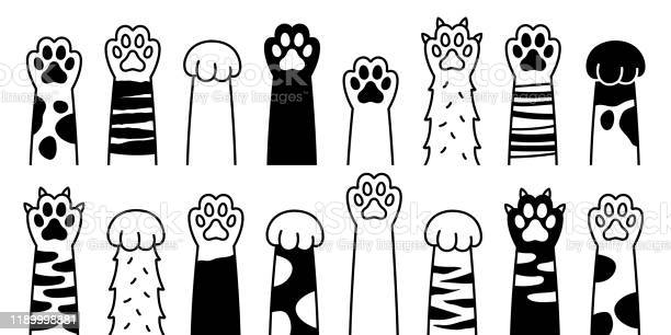 Cat paw dog paw cat breed vector doodle illustration vector id1189998881?b=1&k=6&m=1189998881&s=612x612&h=zmxnnmjfzwsj1pg3njjx q056z9m0ka2du9n948whjy=