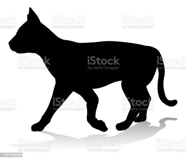Cat pet animal silhouette vector id1191184285?b=1&k=6&m=1191184285&s=612x612&h=wnnu3zo7gsf qczkytpdb 6 huopgfrn6dvytctttho=