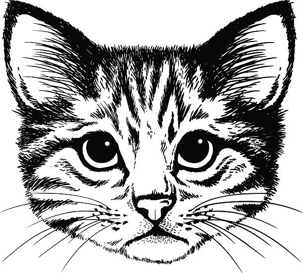 Tabby Cat Illustrations, Royalty-Free Vector Graphics ...