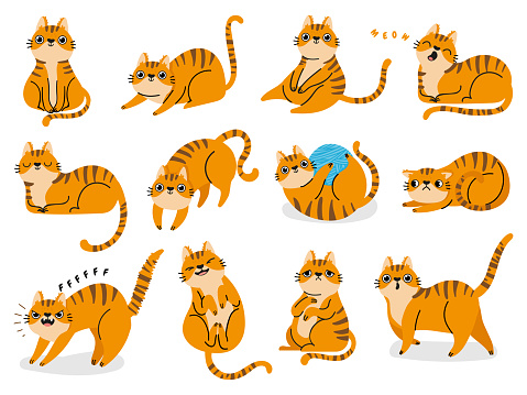 Cat poses. Cartoon red fat striped cats emotions and behavior. Animal pet kitten playful, sleeping and scared. Cat body language vector set