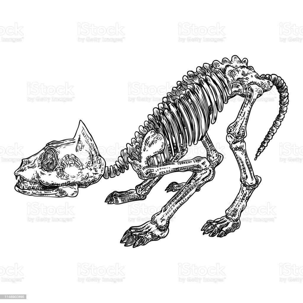 Cat Predator Skull Dead Animal Engraving Hand Drawing Head