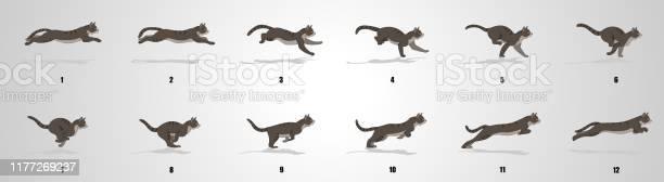 Cat run cycle animation sequence vector id1177269237?b=1&k=6&m=1177269237&s=612x612&h=mwopcpr34xchcyp7jpn1xwy6nfhvd2twaltcdijbpn0=