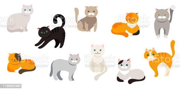 Cat set of flat cartoon icons vector vector id1135602360?b=1&k=6&m=1135602360&s=612x612&h=gl4 zr6rds4vfwljgwc7ybpkouq9pggssvp byusppk=