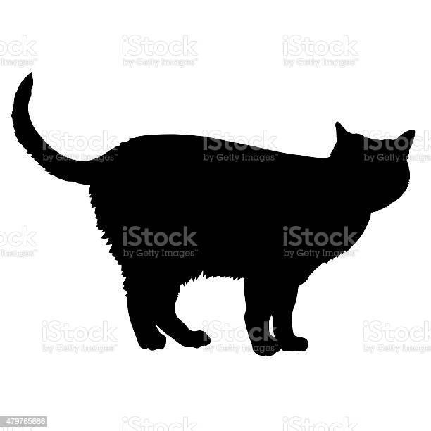 Cat silhouette vector id479765686?b=1&k=6&m=479765686&s=612x612&h=myio ashovc8kq5qtnitunlib7z0esngve4gandno6u=