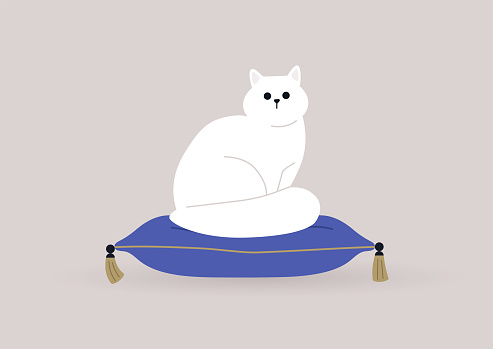 A cat sitting on a pillow with golden tassels, domestic pets