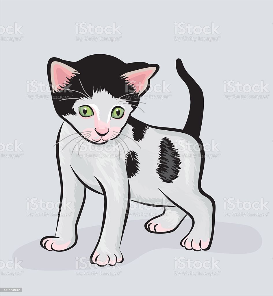 cat royalty-free cat stock vector art & more images of animal