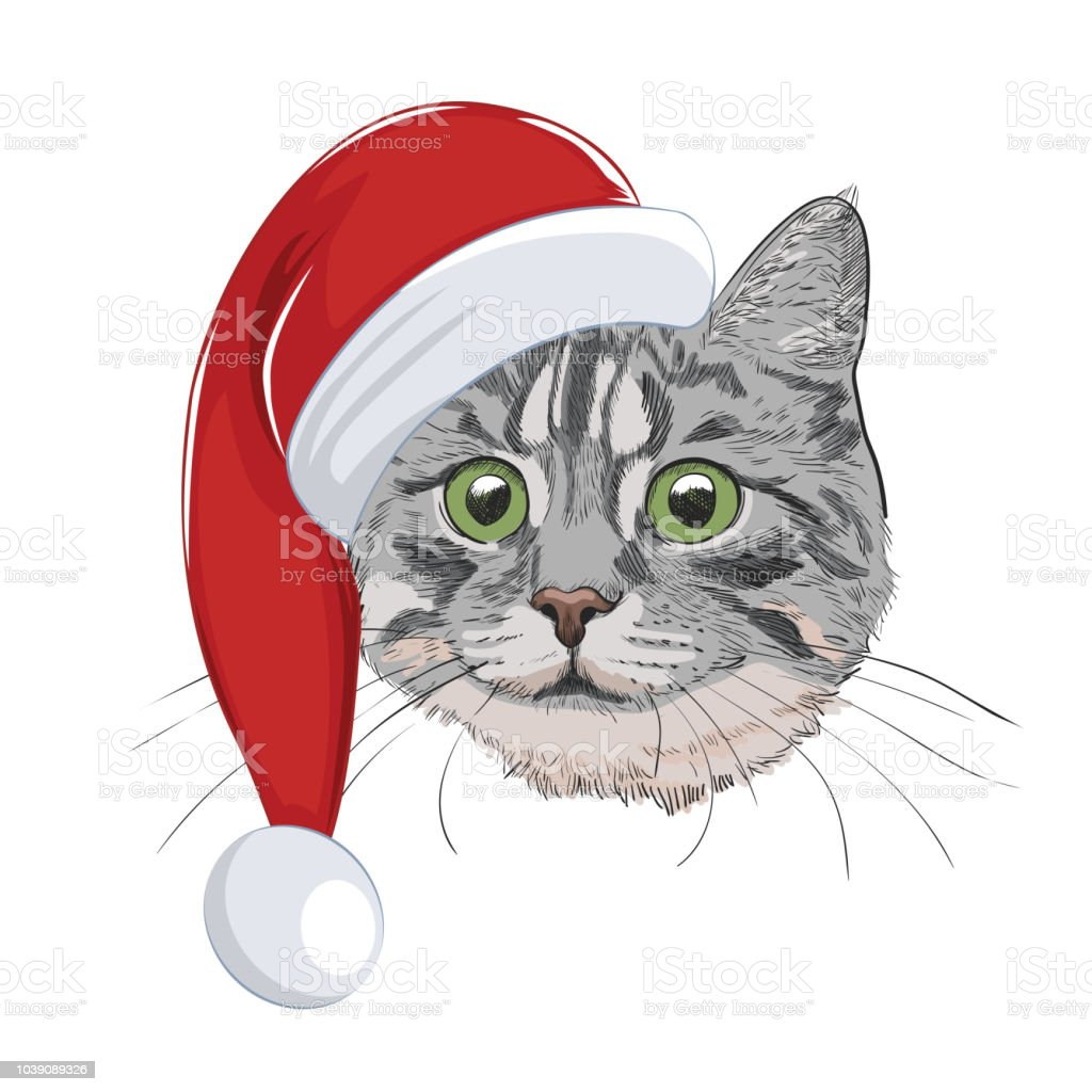Cat With Christmas Hat Isolated On White Background Cute Cat