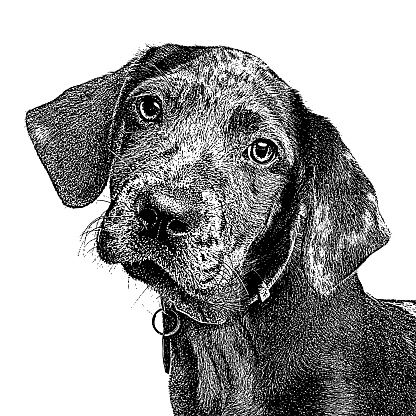 Catahoula Leopard Dog Puppy in animal shelter