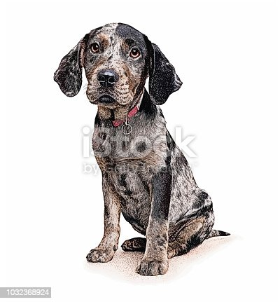 Catahoula Leopard Dog Puppy in animal shelter waiting to be adopted
