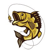 Catching Bass Fish. Fish Color. Vector Fish.