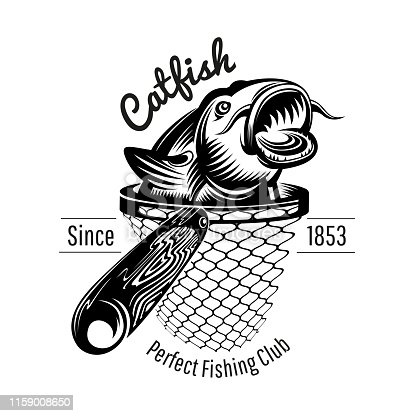 Catfish head up from landing net in engraving style. Label for fishing or fishing shop isolated on white