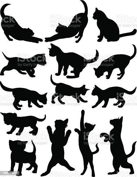 Cats 1 vector id165075572?b=1&k=6&m=165075572&s=612x612&h=x02gxx6  yqkecfedqqmjctkyzkvof4rf884wtese5u=