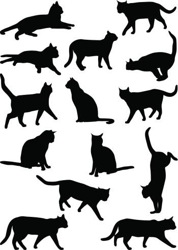 Cats 2