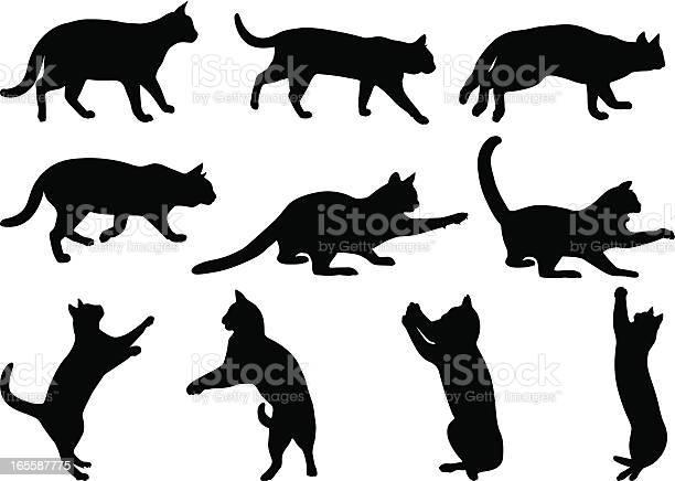 Cats 3 vector id165587775?b=1&k=6&m=165587775&s=612x612&h=l5sulobb4tcgtldx1l6tanuakd7mtrdmrmys 2hiqak=