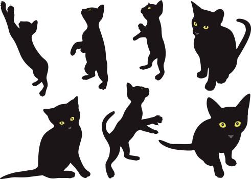 Cats 4