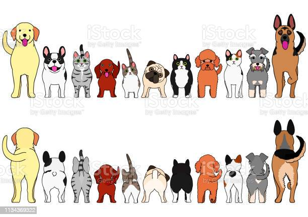 Cats and dogs border set vector id1134369322?b=1&k=6&m=1134369322&s=612x612&h=gj8ypalvvsnls1 zef9igp7udqadphny1zleunzhbqe=