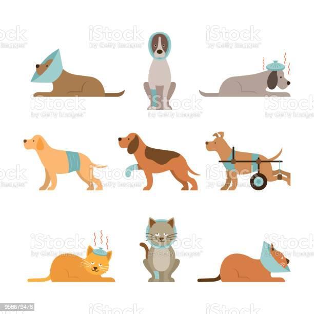 Cats and dogs get sick vector id958679476?b=1&k=6&m=958679476&s=612x612&h=kltgxso2k0bwsrkgbgx0vkps8 t8tokd mzqpy0fqka=