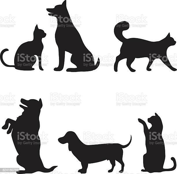 Cats and dogs set vector id524150759?b=1&k=6&m=524150759&s=612x612&h=910qrrhhcrkauolzjla6hzec1o1ydn1t4m7nyxwkpow=