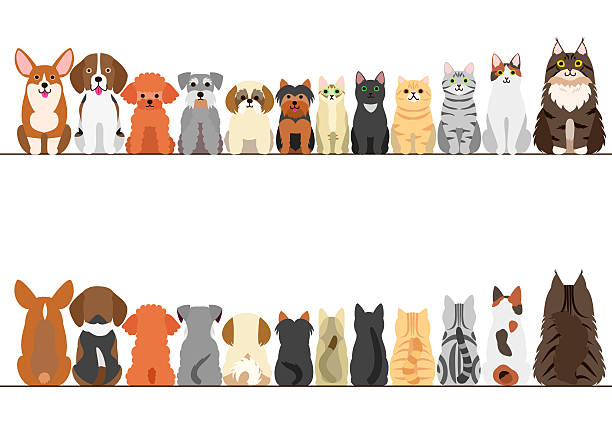 ilustraciones, imágenes clip art, dibujos animados e iconos de stock de cats and small dogs border set, front view and rear view - mascota