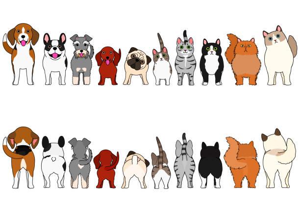 bildbanksillustrationer, clip art samt tecknat material och ikoner med katter och små hundar gräns set - bum