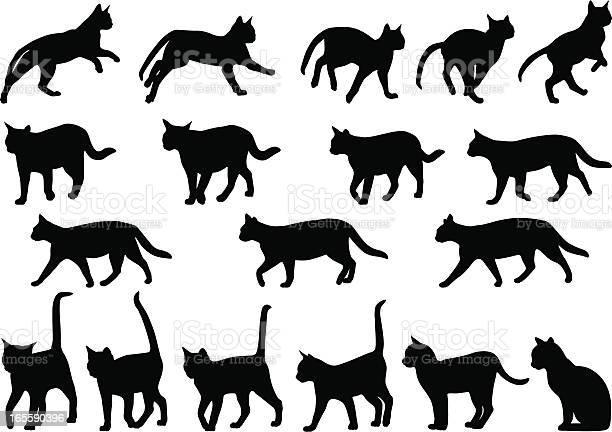 Cats behavior vector id165590396?b=1&k=6&m=165590396&s=612x612&h=97gv5jyzimxayitgiqcizle p6myfg9ps7bartjsqom=