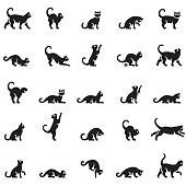Cats body language