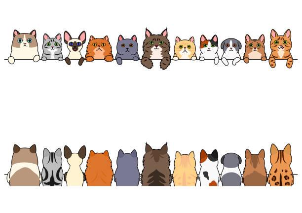 猫セット、フロント側と後ろ側の国境します。 ベクターアートイラスト