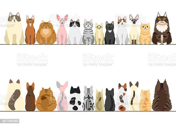 Cats border set front view and rear view vector id627460350?b=1&k=6&m=627460350&s=612x612&h=pj8ypbo3pufpen8 chwsmjosnitkj7vxaxoi324adhs=