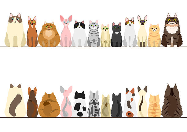 cats border set, front view and rear view - cat stock illustrations, clip art, cartoons, & icons
