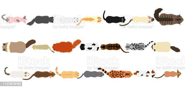 Cats border set vector id1127679762?b=1&k=6&m=1127679762&s=612x612&h=ahtnrq4voetsewutfiquxj8wab3kc0lemlhovatoho8=