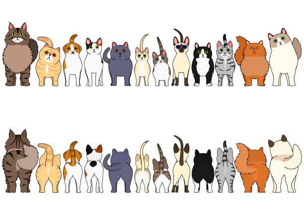 猫ボーダーセット ベクターアートイラスト