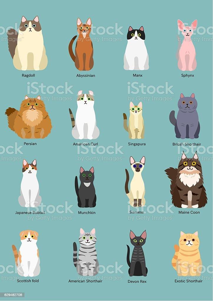 cats breed ベクターアートイラスト