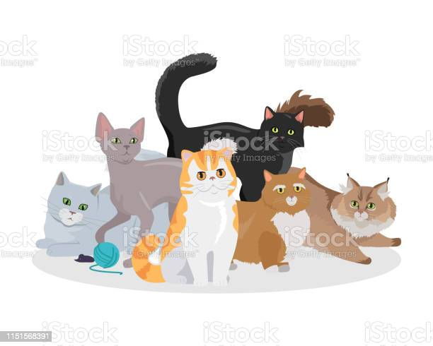 Cats breeds flat vector web banner vector id1151568391?b=1&k=6&m=1151568391&s=612x612&h=iaxn9jccupncyqgcpc7dq2kyzm65jjemqwcdm uynh4=