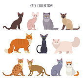 Vector collection of  different cats breeds - havana brown, sphynx, British Shorthair, Siamese, Maine Coon, Oriental, Persian, Bengal, Abyssinian, Russian Blue, Exotic, isolated on white.