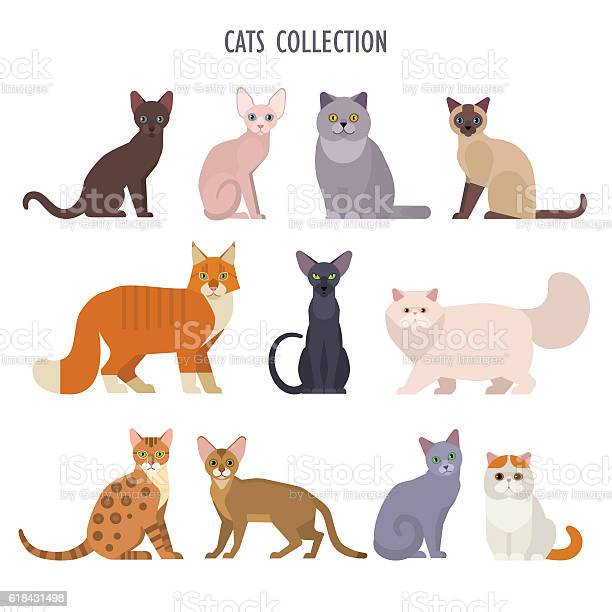 Cats collection vector id618431498?b=1&k=6&m=618431498&s=612x612&h=evrsalpfswgearfeipov3rljqtmmn 9xjn4oxmmi0ps=
